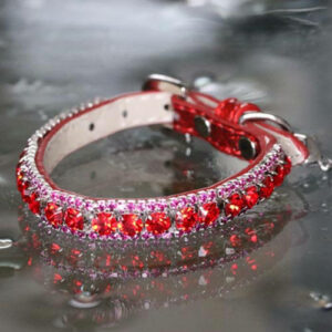 Inner Harmony - Root Chakra Inspired Pet Collar